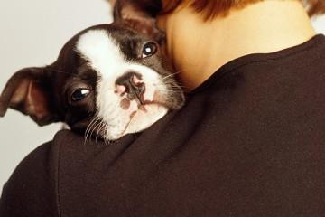 Cane sulla spalla