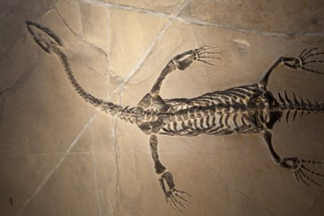 Keichosaurus
