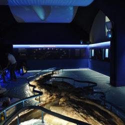 Nuova sala Balena