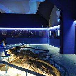Sala Balena 1
