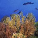Pesci del mare