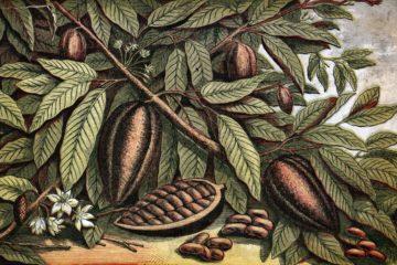 La prestiosa Accademia dei Georgofili accoglie domani la giornata di studio Il cacao in Toscana, organizzata in collaborazione con Cna Toscana. Saranno esaminati vari aspetti della materia, per altro prelibata.