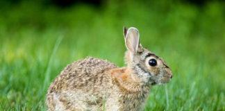 Un coniglio su un prato