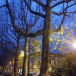 Foglie verdi sotto le luci artificiali in pieno inverno