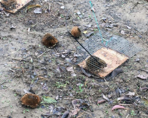 I semi di girasole disseminati per attirare gli uccelli migratori