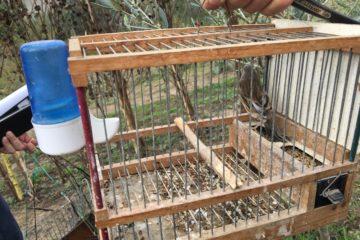 La gabbia con l'uccello vivo