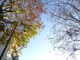 Un platano sotto la luce, uno degli alberi di firenze sempre verdi