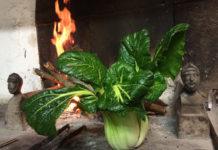 Una varietà di Brassica Rapa Pekinensis, perfettamente acclimatata alla piana di Prato-Firenze
