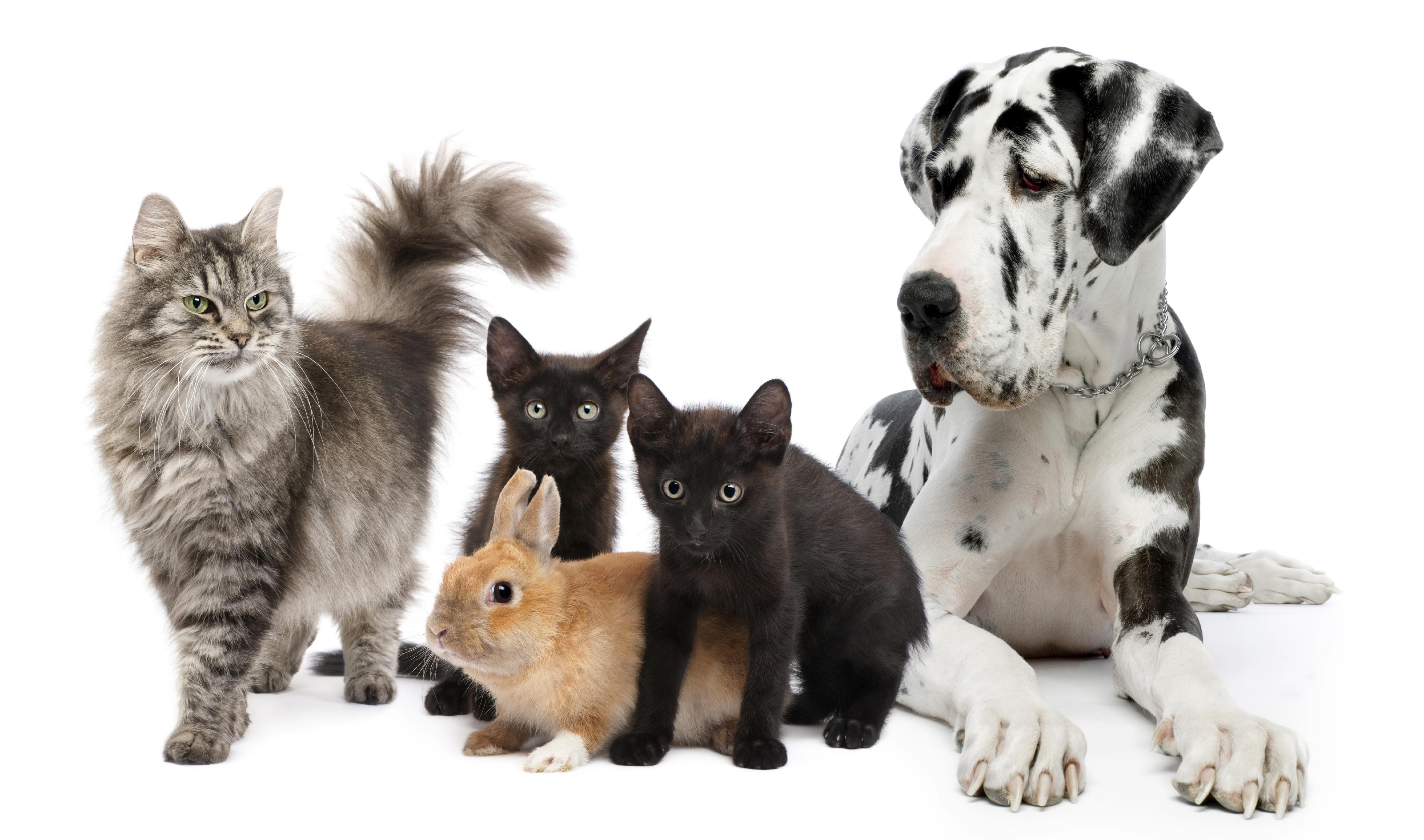 Gatti conigli e cani insieme in una foto