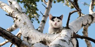 Gatto su un albero