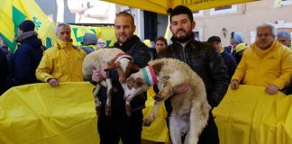 Pastori sardi latte ovino Coldiretti