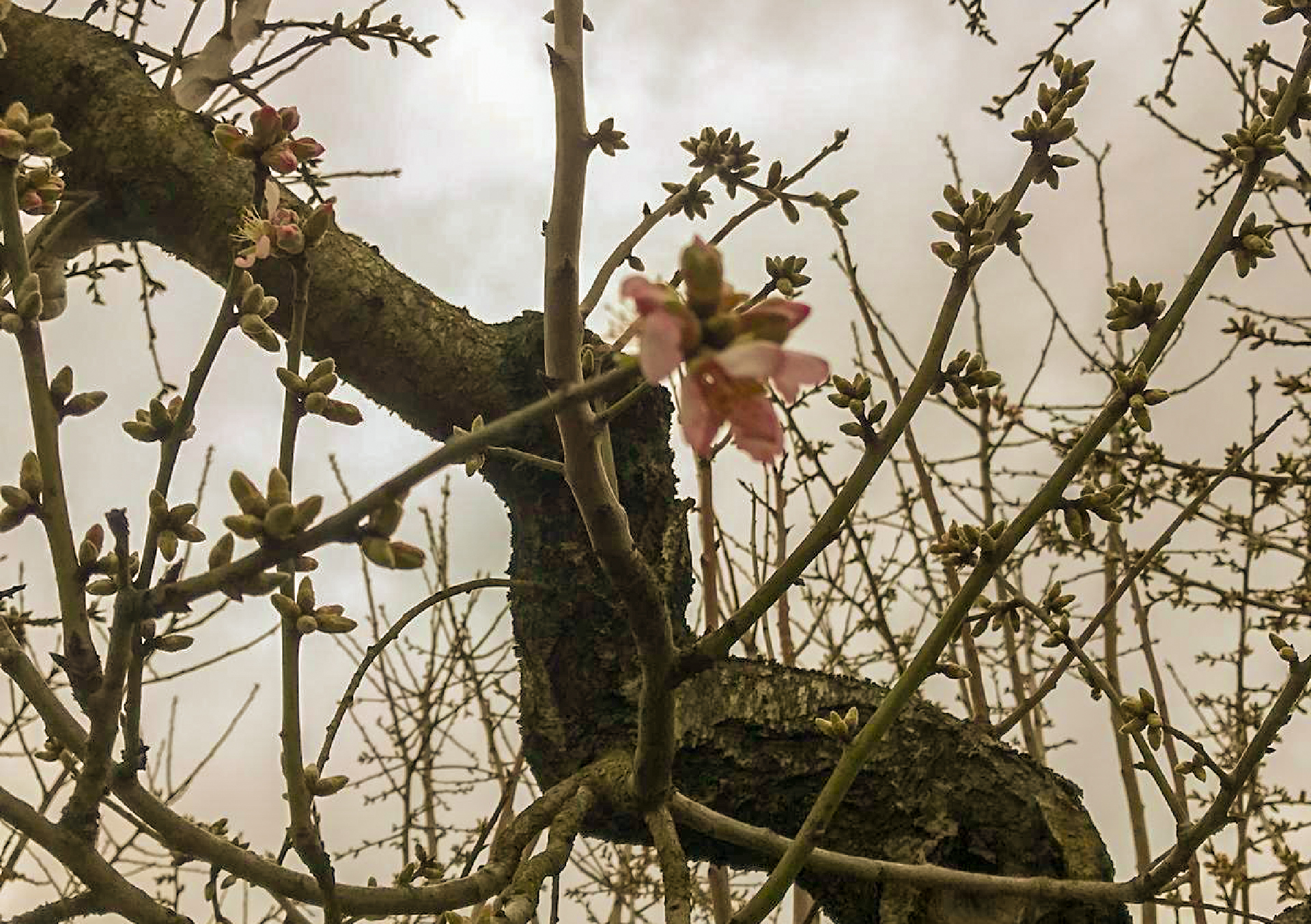 Pianta fiorita