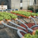 Prato City Vegetable garden