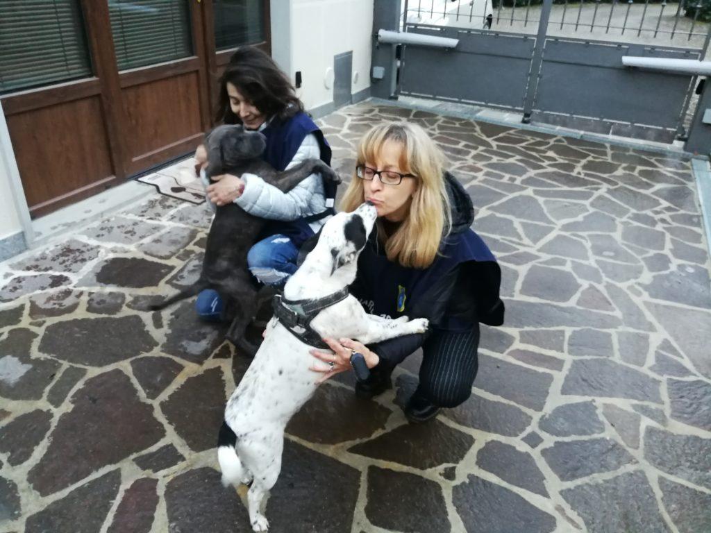 Affidamento in custodia del cucciolo