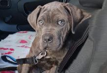 il cucciolo sequestrato