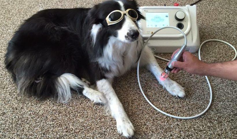 Laser per la cura degli animali