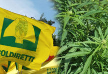 Cannabis Coldiretti