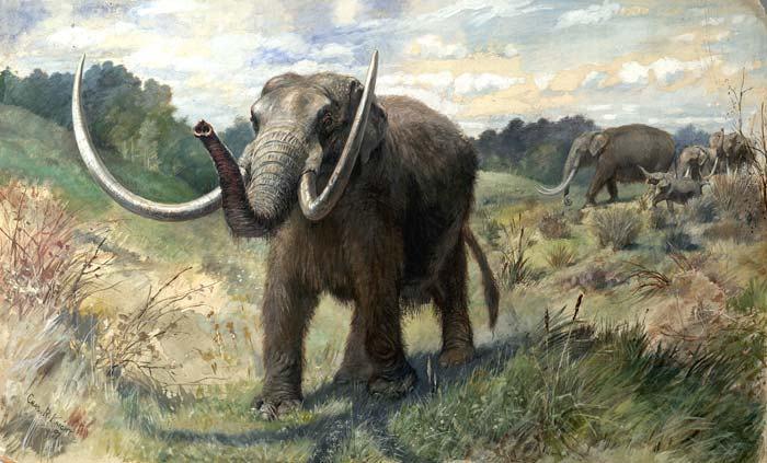 Adolescente trova mascella di mammut preistorico nella fattoria di un amico