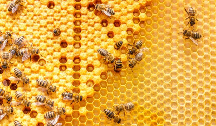 Api al lavoro in un alverare dove producono il miele