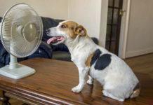 Cane al ventilatore