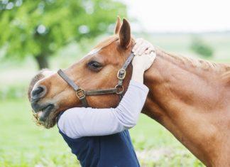Un cavallo abbracciato