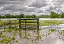 Un campo allagato
