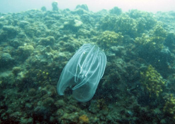 Una noce di mare