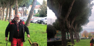 Cani tarlo asiatico