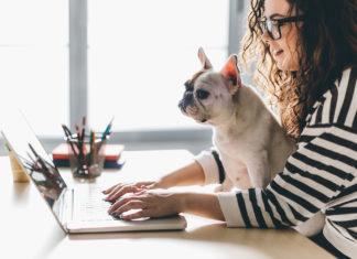 Greve in Chianti: si può andare in ufficio col cane