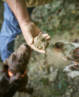 Un cercatore di tartufi con il proprio cane