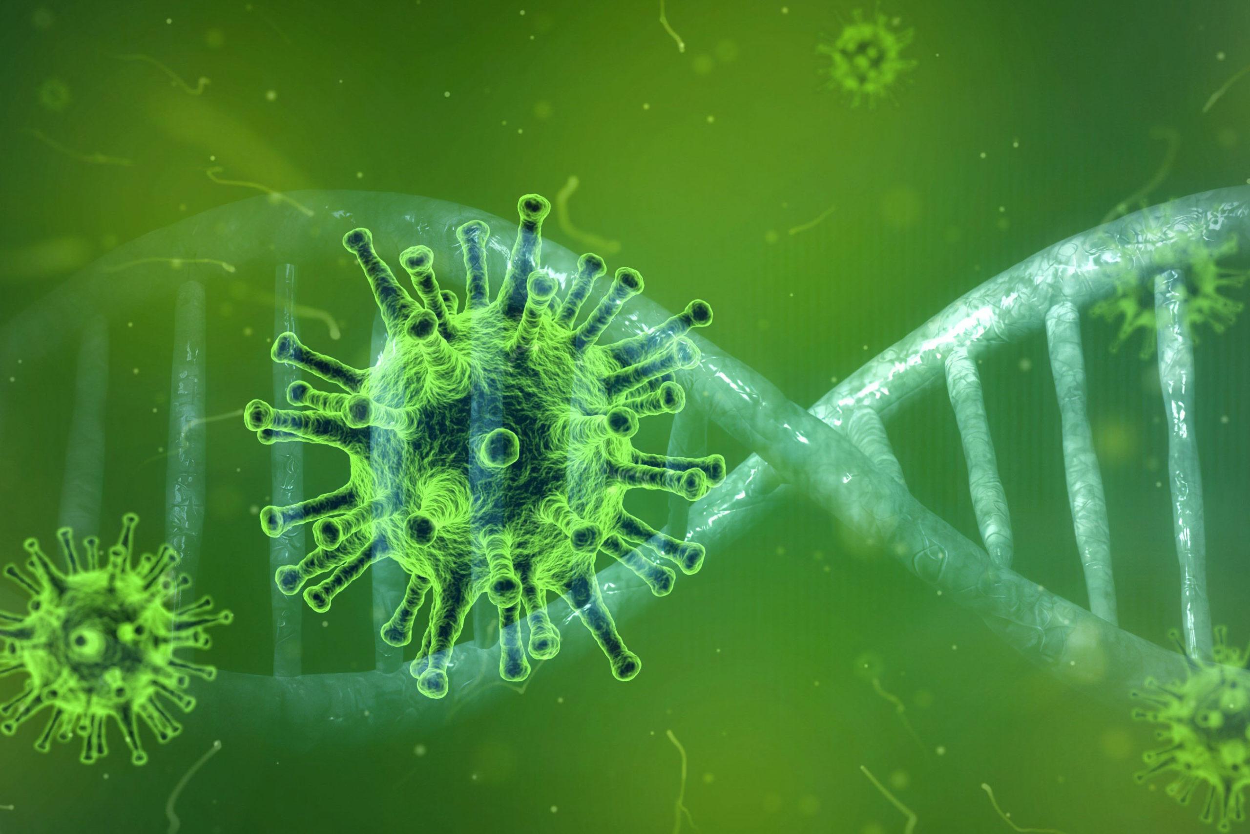 Conoravirus