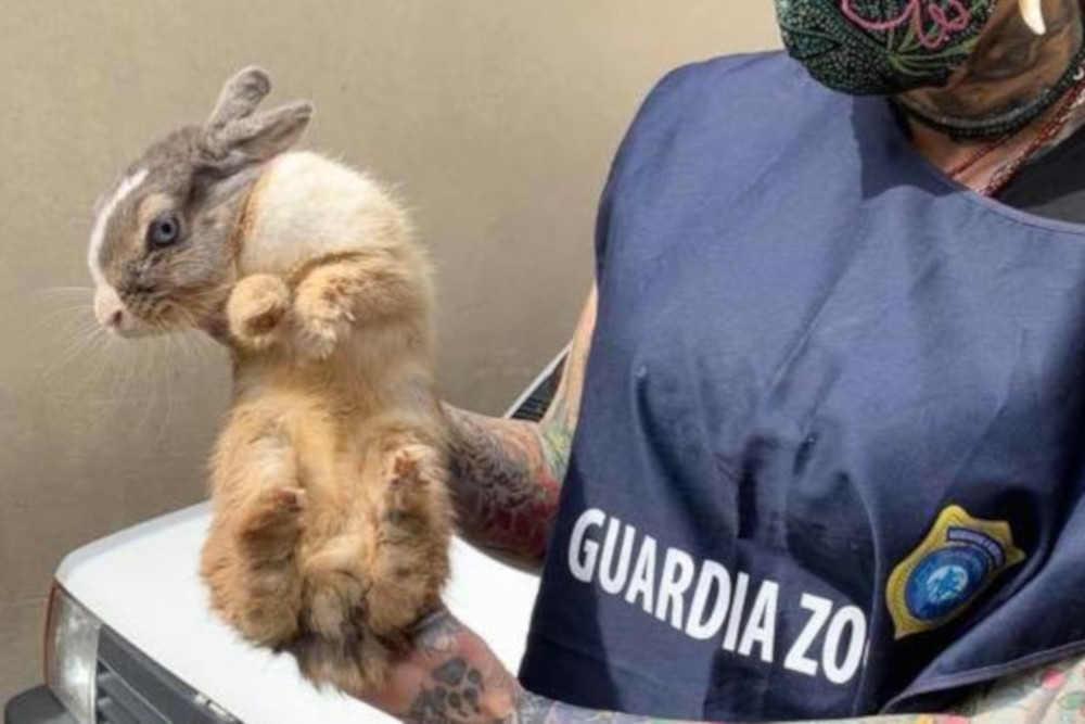 Il coniglio domestico con la guardia zoofila earth