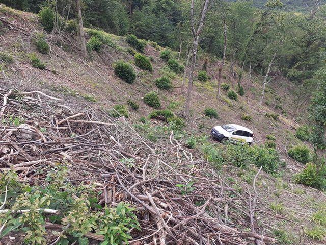 Auto delle poste nel bosco