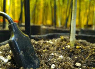 Rilevazione suolo cannabis
