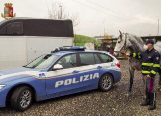 Trasporto abusivo cavalli