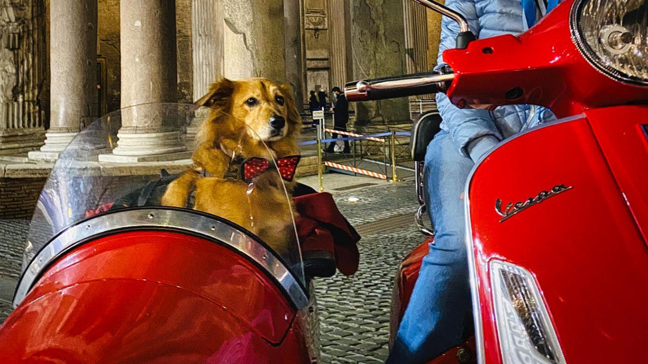 Col cane in vespa a Roma